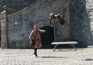 steppe-eagle-at-chateau-de-bouillon-3